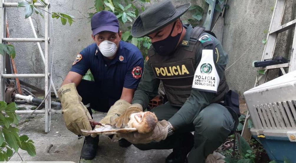 Gracias al llamado de la comunidad, la Policía logró el rescate.