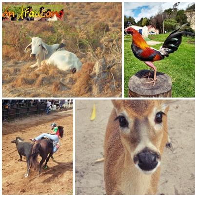 Para mi concepto cualquier persona que hable sobre el maltrato animal debe ser vegetariana, o se estaría contradiciendo.
